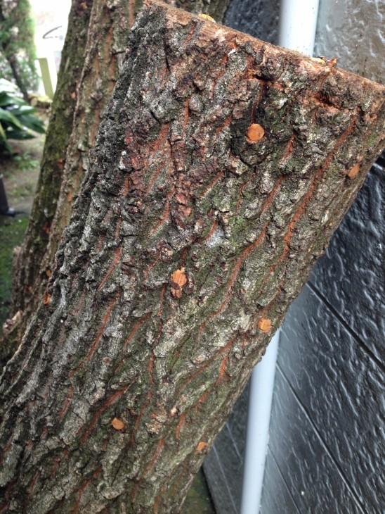 筒井測量 シイタケの菌打ち